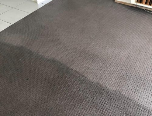 Check out this carpet cleaning project we did recently
